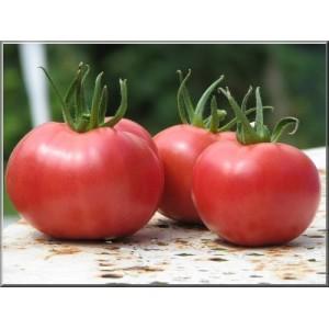 Tomate variété ancienne au kg