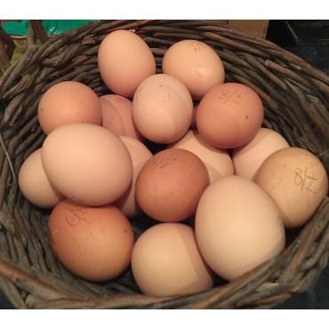 12 œufs frais de Puissalicon